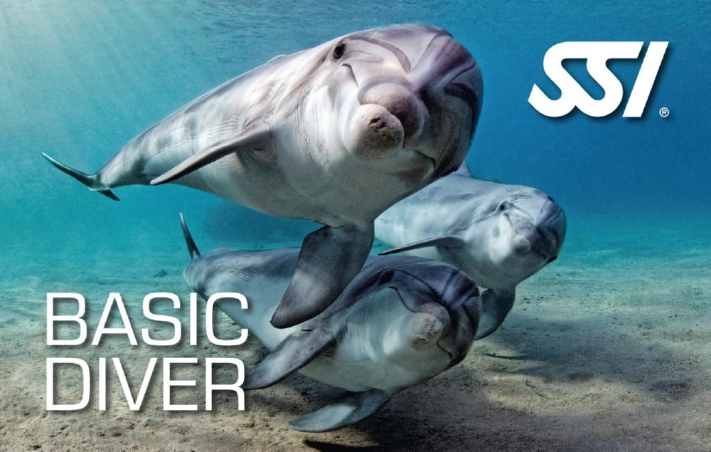 BAsic Diver - Osnovni ronilac