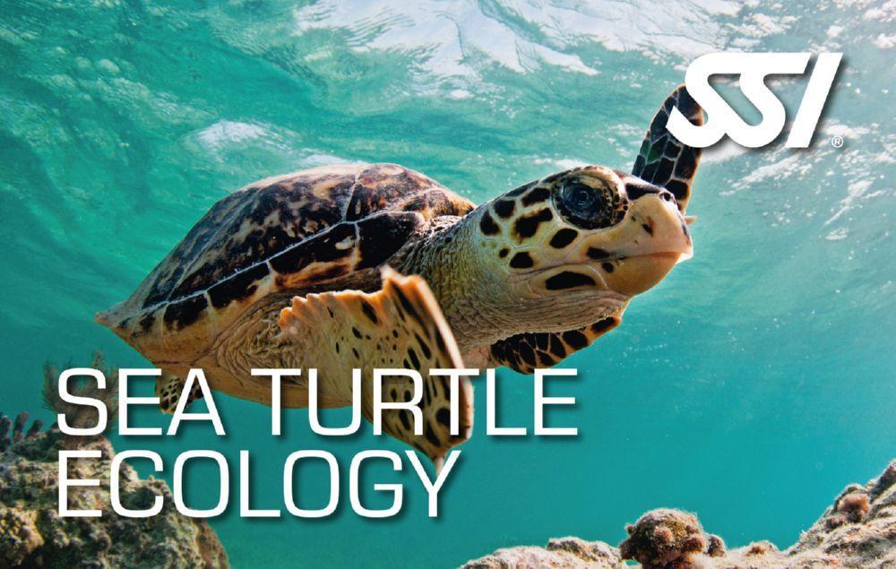 Poznavanje kornjača